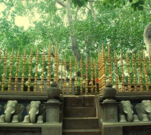 Jaya Sri Maha Bodhi, Anuradhapura Sri Lanka